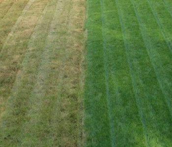 kenosha lawn care, lawn care near me, lawn care service