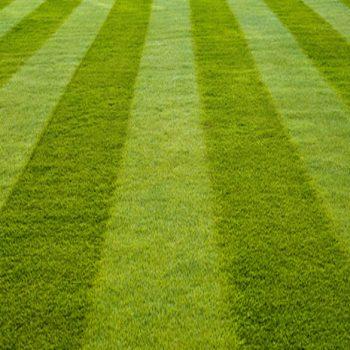 lawn mowing service kenosha, kenosha lawn mowing, kenosha lawn maintenance