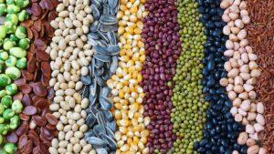 legumes, beans, superfood
