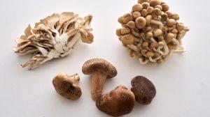 mushrooms, fungus, superfood
