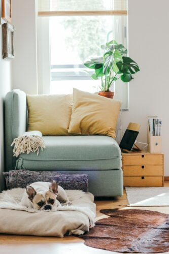 Picture of a Chair in a living room with a dog laying on a pillow