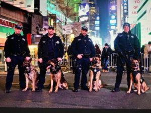 Four police officers with their German Shepard police dogs