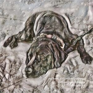 An embossed artwork of a black Labrador sleeping on the ground