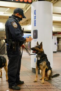 Police man holding a hand up to instruct a German Shepard police dog