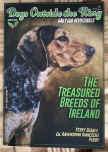 Side profile of a Kerry Beagle as the cover of the Dog Outside the Ring magazine
