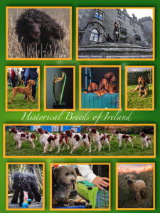 A picture collage of black dogs, a stone church, small brown dogs, and brown-and-white dogs from Ireland