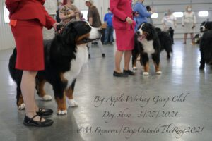 Border Collies with female handlers dressed in formal suit dresses standing in a line formation