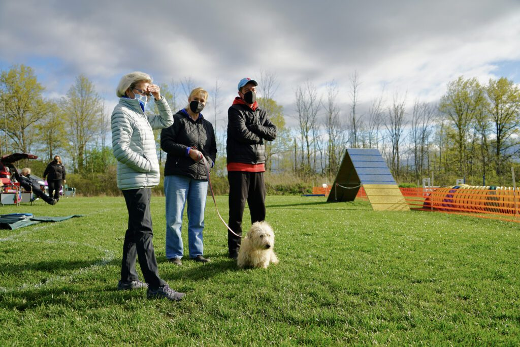 Three people in a dog training course with a cream-colored Terrier