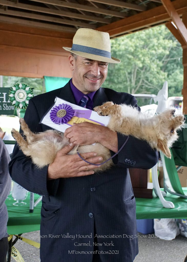 Man in a suit and a cream-colored fedora hat holding a Norfolk Terrier dog like a baby