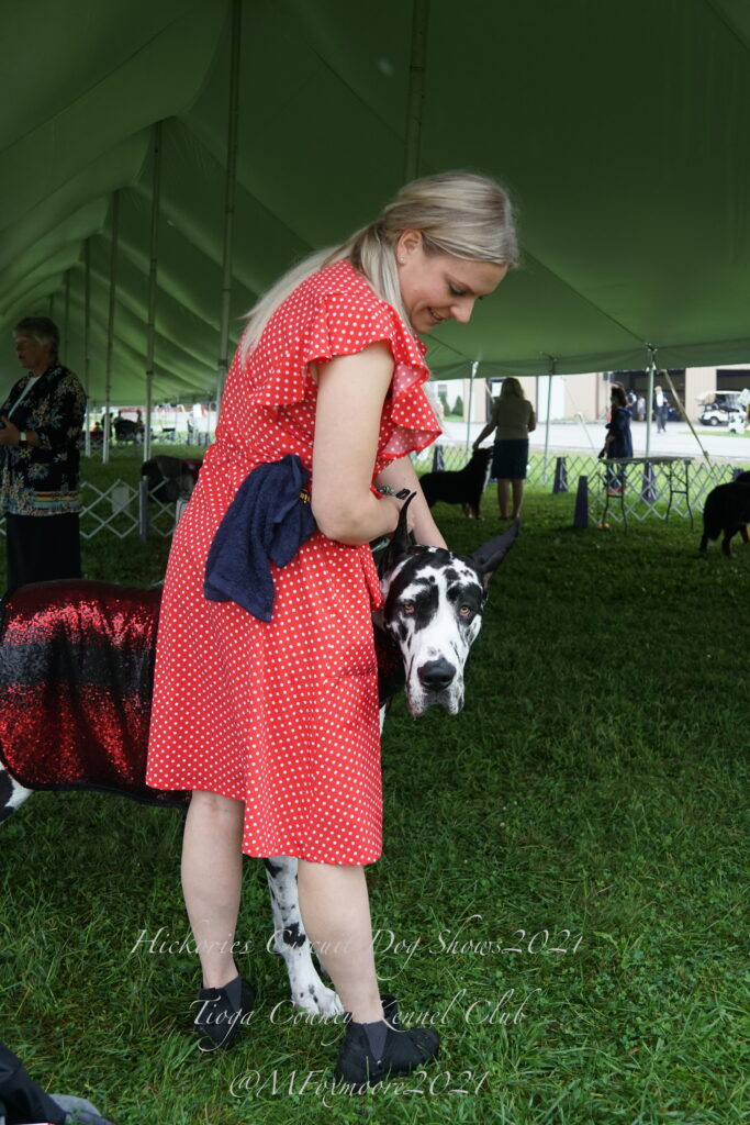 Woman in a red dress petting a black-and-white spotted Great Dane dog on the head
