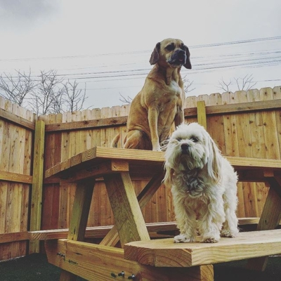 Two dogs enjoying the outdoor play area during doggy daycare at Homedog Resort located in downtown Columbus, Ohio