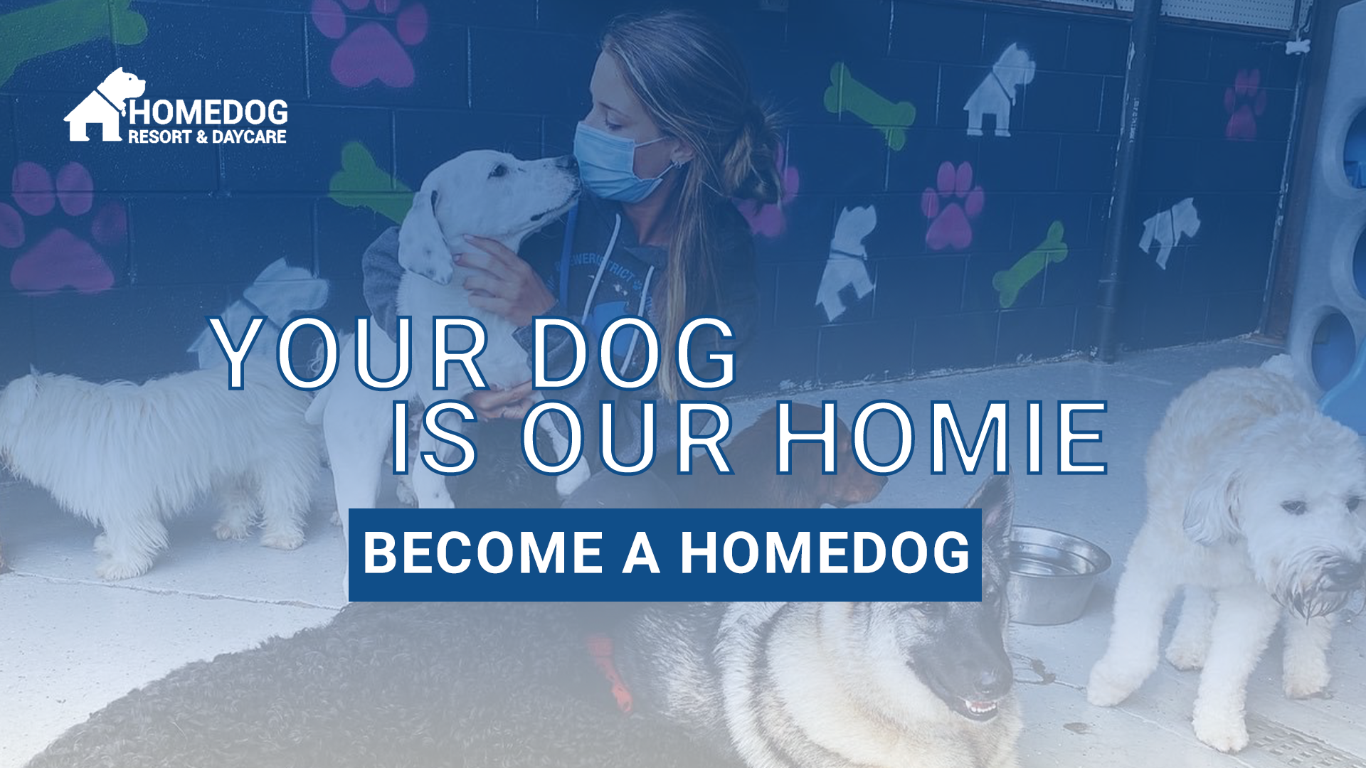Homedog Resort & Daycare Dog Boarding Dog Daycare and Dog Training Facility