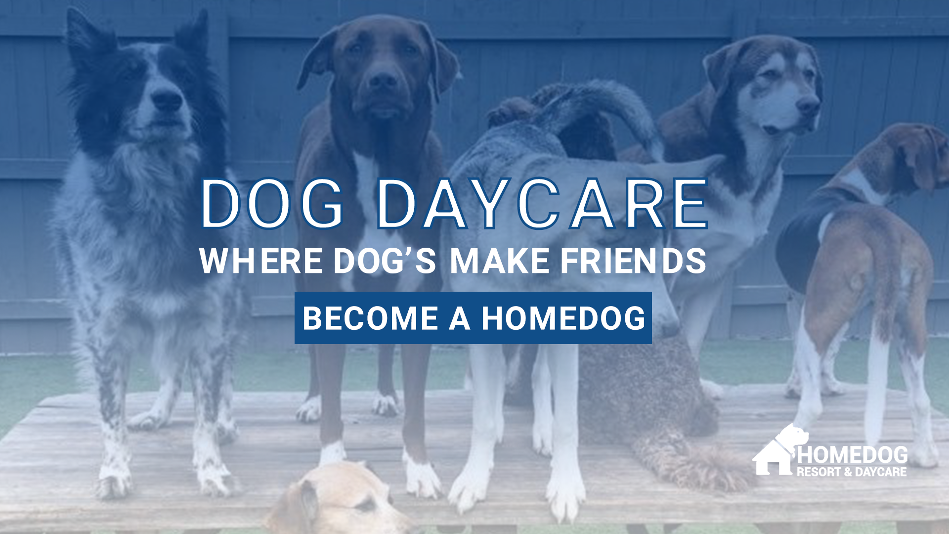 dogs enjoying dog daycare at homedog resort & daycare in downtown Columbus, Ohio
