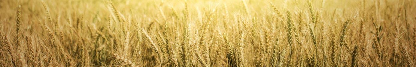 photo of prairie grass