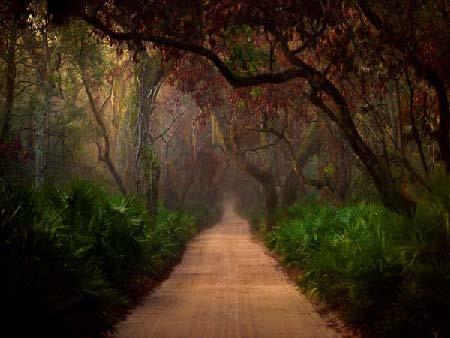 Jack Spencer Photograph of Woodland Path, Cumberland 22