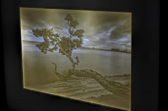 """Close-up of the backlit lithopane of """"Tree in Key Biscayne"""" by photography Sandra Canning. Photo by Sandra Canning, www.sandracanning.com"""