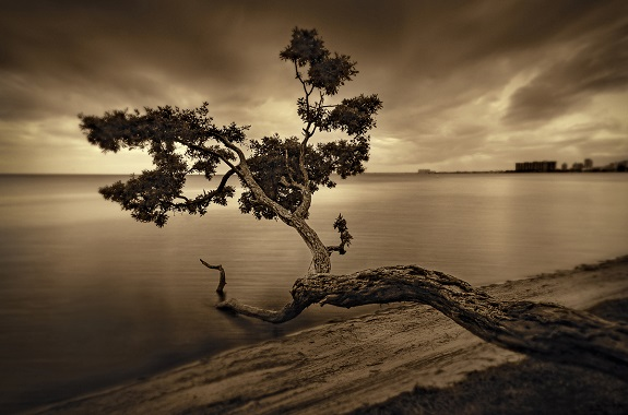 """Original 2D photography of """"Tree in Key Biscanyne"""" by photographer Sandra Canning, www.sandracanning.com"""