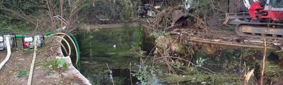 Overgrown Backyard Pool Removal