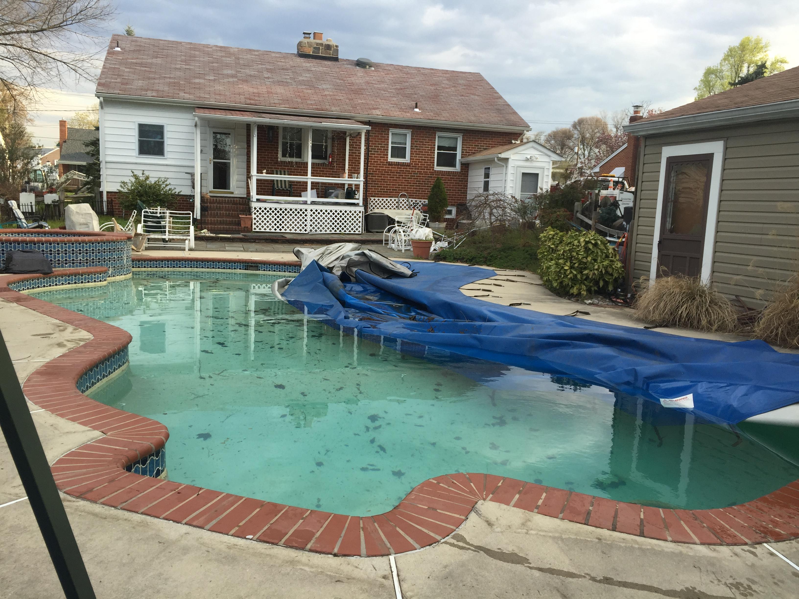 arbutus pool removal