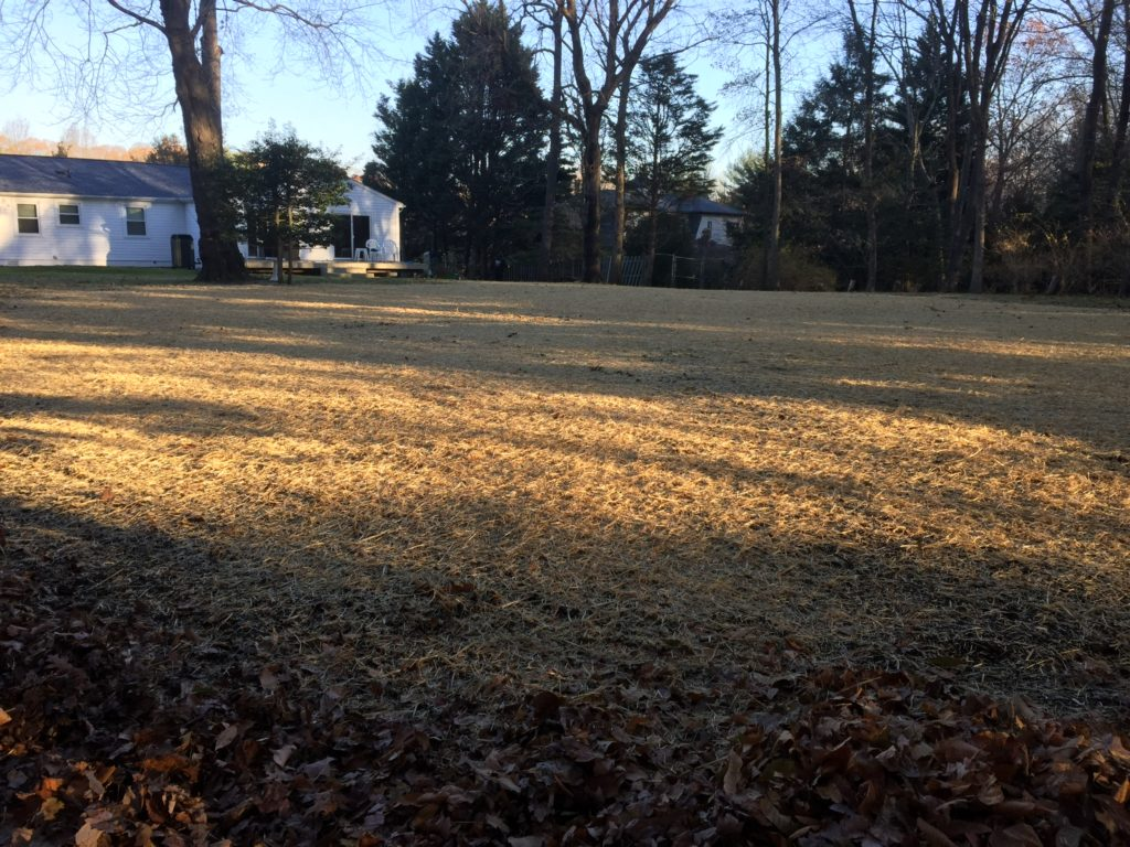 Reclaimed backyard after vinyl pool removal in Davidsonville Maryland