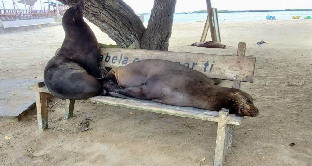 Galapagos Sea Lion are always on a budget since they are free to view