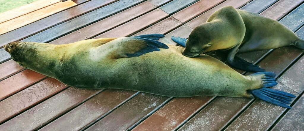 Galapagos Sea Lion with a Pup are free so good on a budget