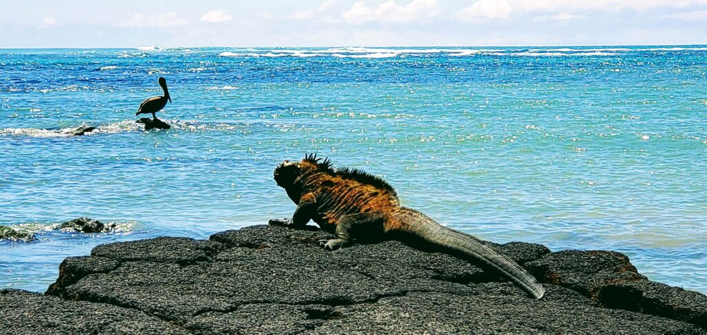 Galapagos on a budget wall of tears trail with marine iguanas and birds