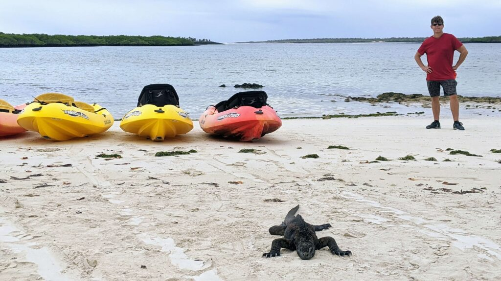 Galapagos on a budget seeing marine iguanas for free