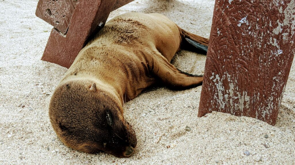 Baby Seal waiting for his Mom to return Galapagos on a budget