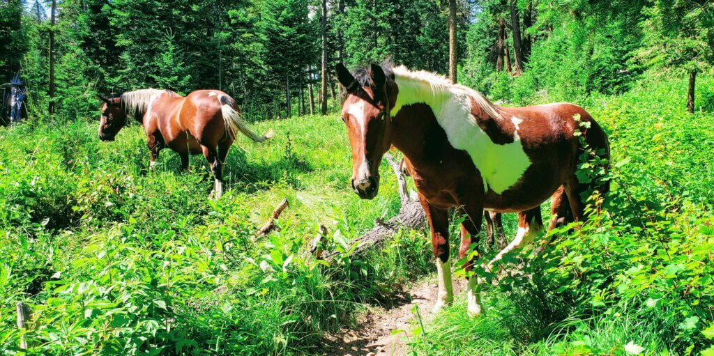 Horses our top 10 travel safety tips during COVID-19