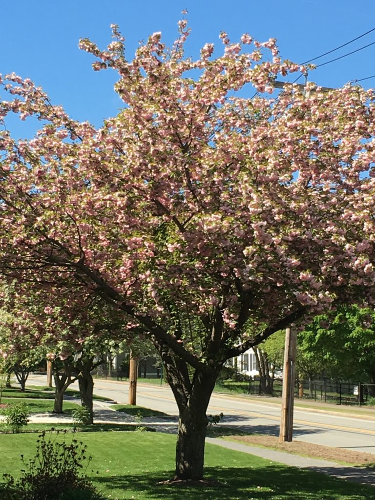 Natick, MA Spring