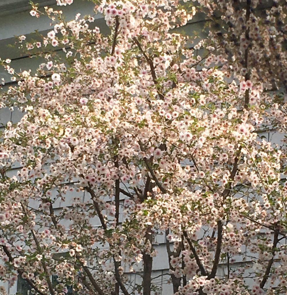 Weston MA flowers
