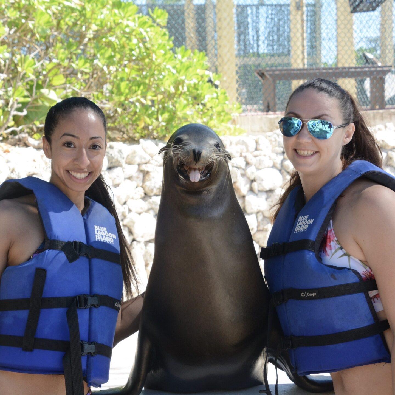 Sea Lion Encounter At Blue Lagoon