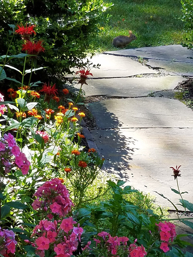 bunny on the flower garden path