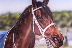 Airbrushed portrait of a horse on canvas