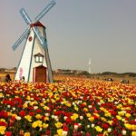 Holland and Tulip Time