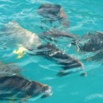 Swimming with the Box Fish - Great Barrier Reef