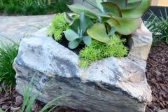 Kalanchoe boulder planter