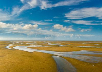 low tide paine's creek