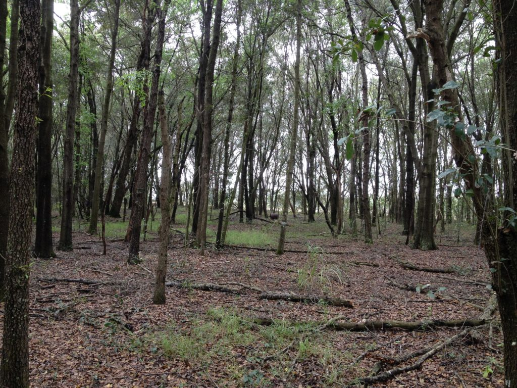 Photo: Lake Minneola property image 01