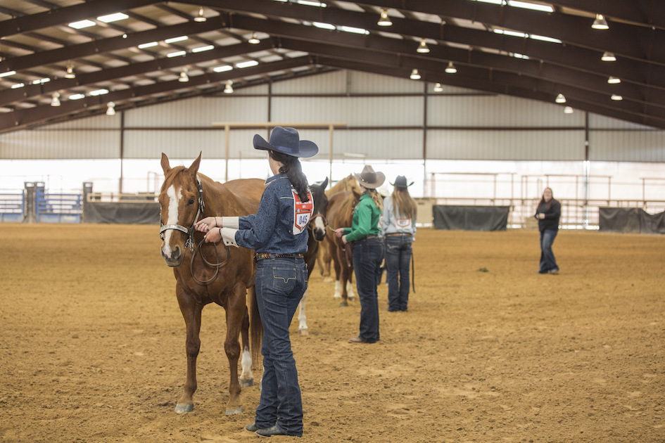 Wise County 4-H horse show 2019