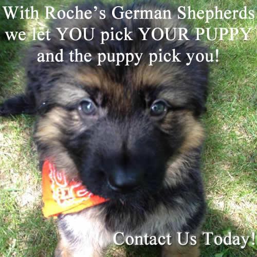 German Shepherd Breeders Wisconsin