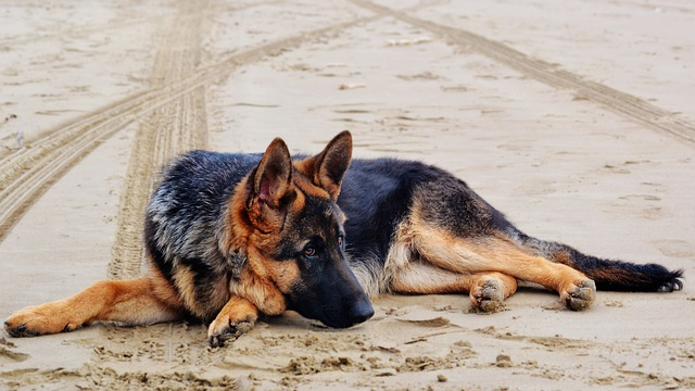 Professional dog breeder Wisconsin