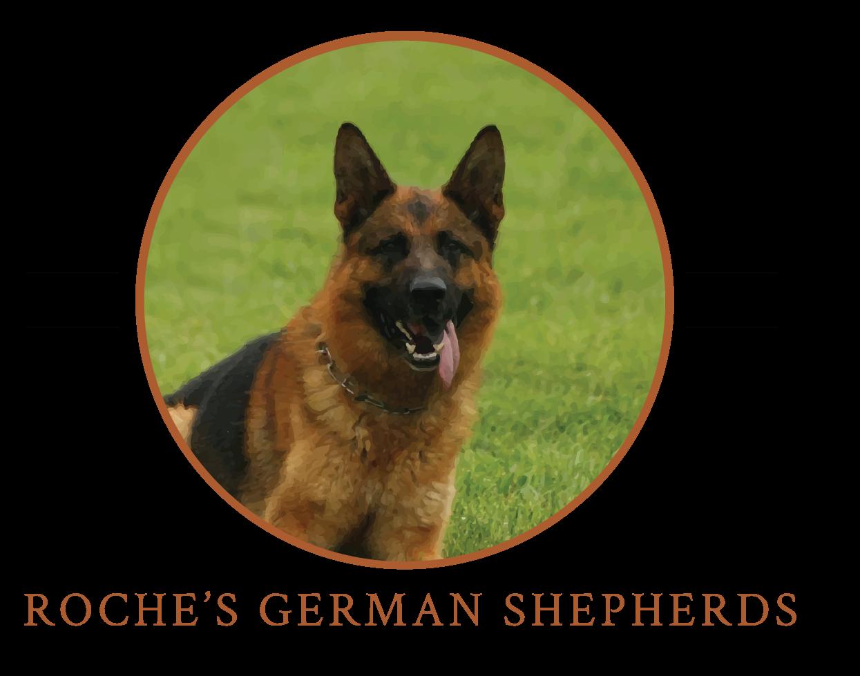 Roche's German Shepherds
