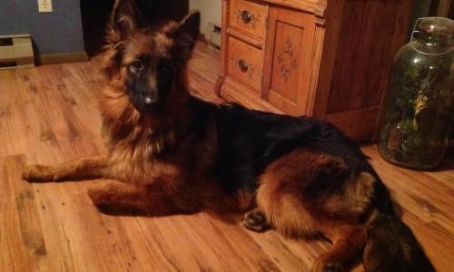 Bona's Puppy at 6 Months
