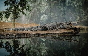 Crocodile - Addiction