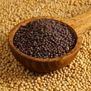 Mustard Seed2 (500x500)