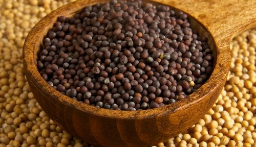 The kingdom of heaven is like to a grain of mustard seed