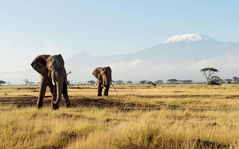 kenya ladyhattan luxury travel blog