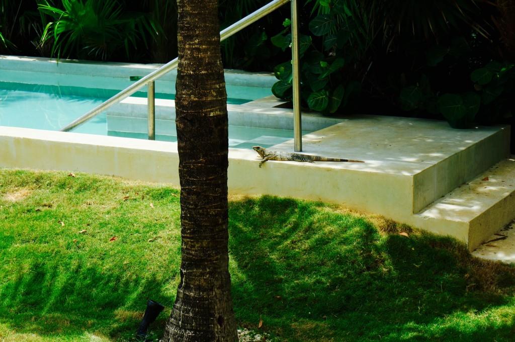 ladyhattan travel blog mexico blue diamond hotel photography by tara moss